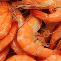 boiled-louisiana-shrimp-400x220_c