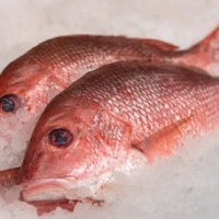 fresh-red-fish-400x278_c