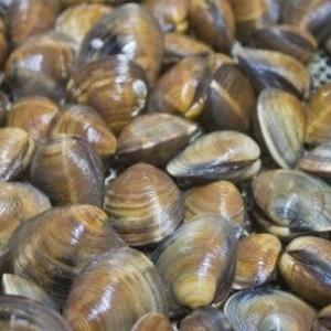 fresh-clams-louisiana-seafood-company